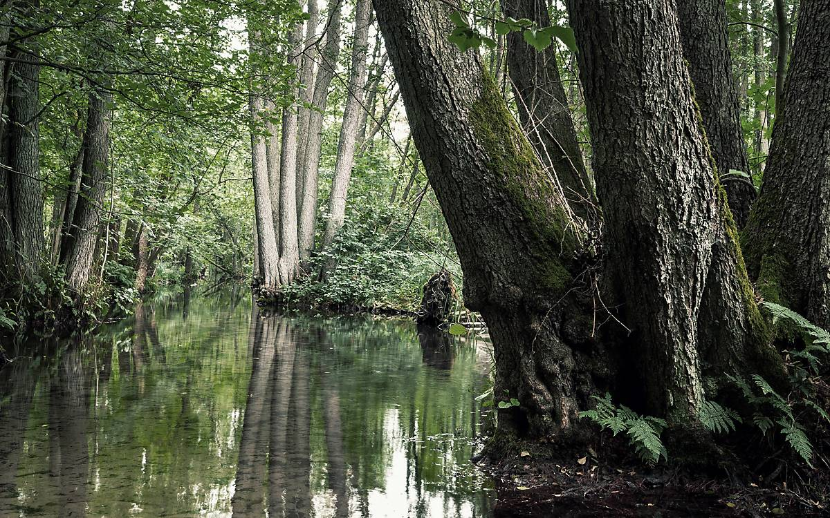 Gewässernahe Waldstandorte