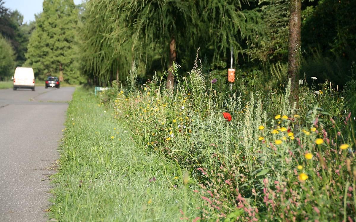 Blühstreifen an der Lärchenallee auf dem Ohlsdorfer Friedhof