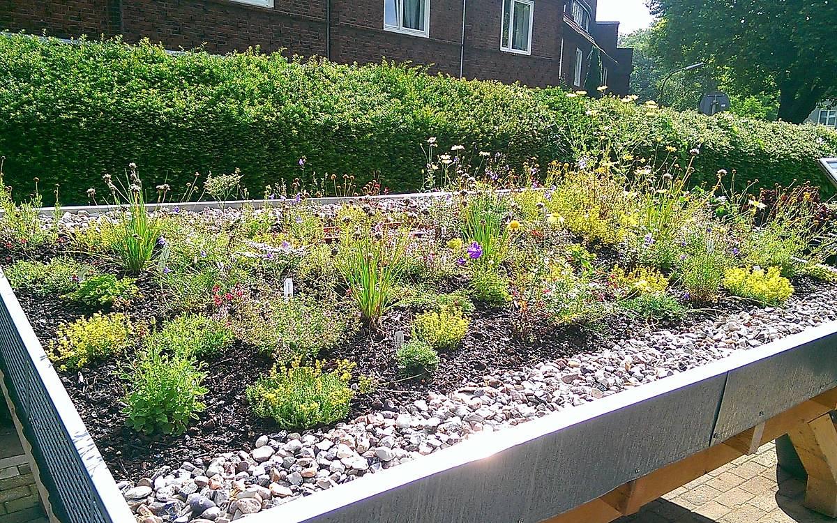 Aufbau eines Gründachmodells im Botanischen Sondergarten Wandsbek