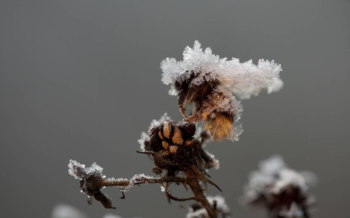 deutsche wildtier stiftung was machen wildbienen und. Black Bedroom Furniture Sets. Home Design Ideas