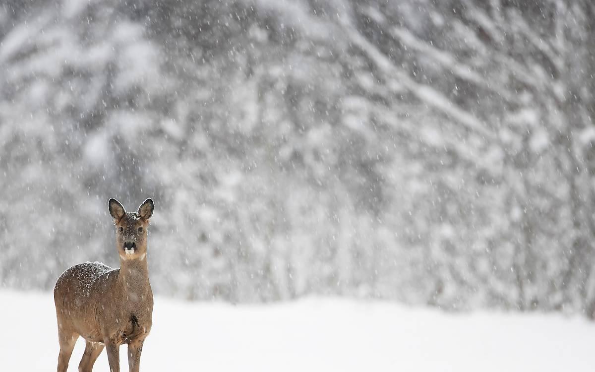 reh-winter-3