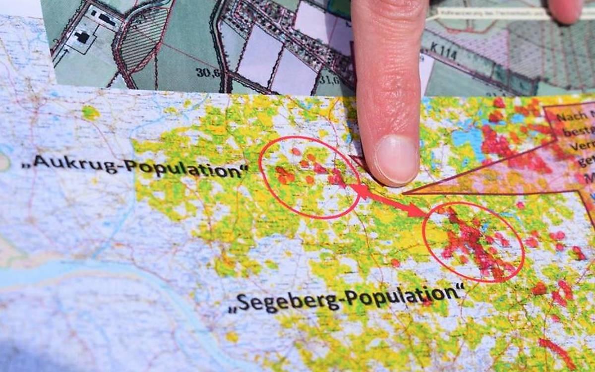 Die beiden Haselmauspopulationen bei Bad Segeberg und Neumünster/Aukrug sollen durch den neu geschaffenen Trittstein miteinander verbunden werden.
