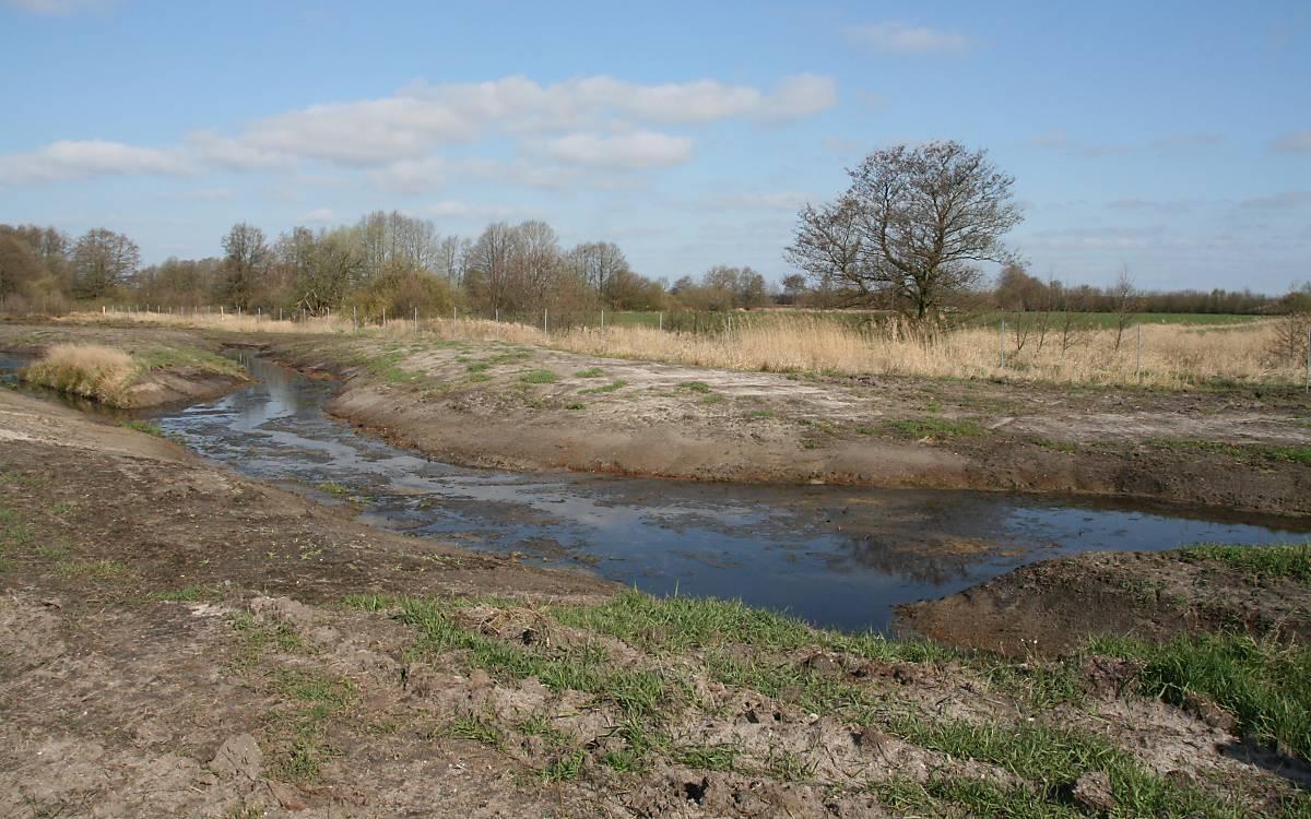 Die Fläche ist zur Stör hin abfallend. Im unteren Überflutungsbereich wird ein Auenwald angelegt, u.a. mit Weiden, Moorbirken und Erlen.