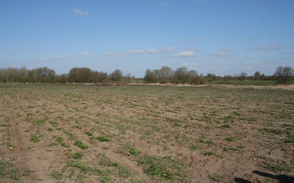 Auf diesem etwa 2 Hektar großen ehemaligen Maisacker wird in ein paar Jahren ein neuer Wald für die Haselmaus entstehen.