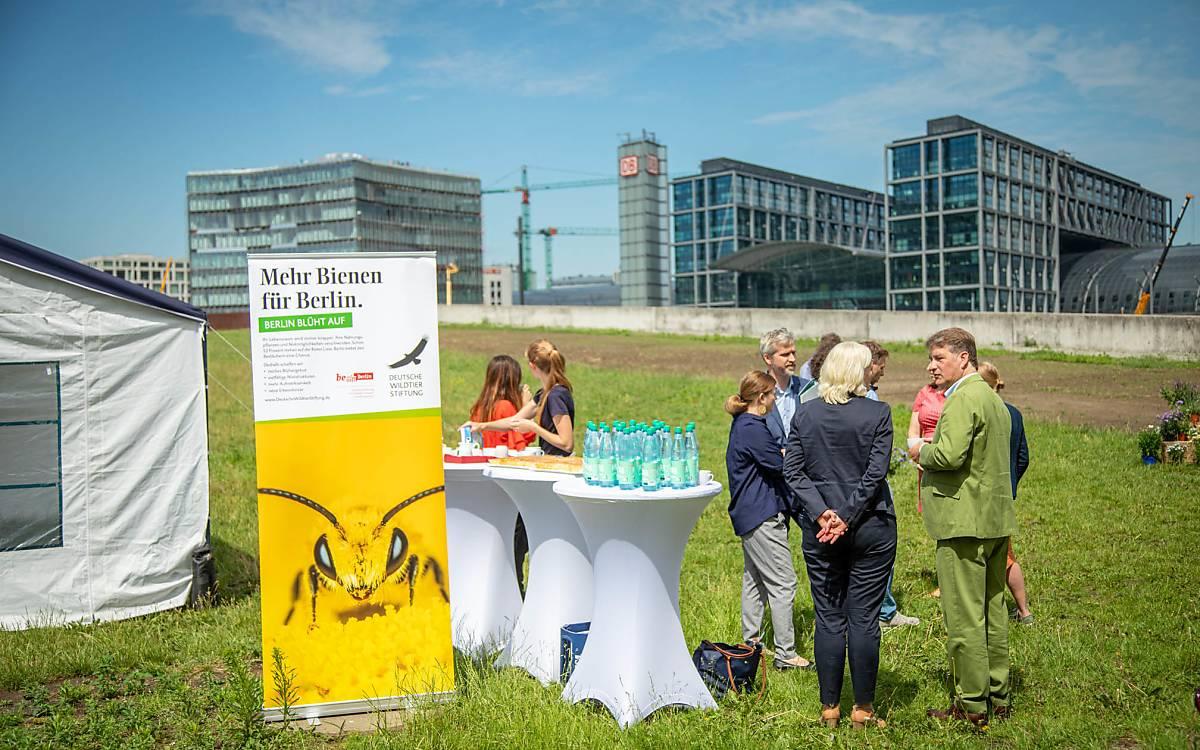 Die neue Wildbienenfläche direkt vor dem Hauptbahnhof zeigt: Wildbienenschutz kann gerade in Städten hervorragend  funktionieren!