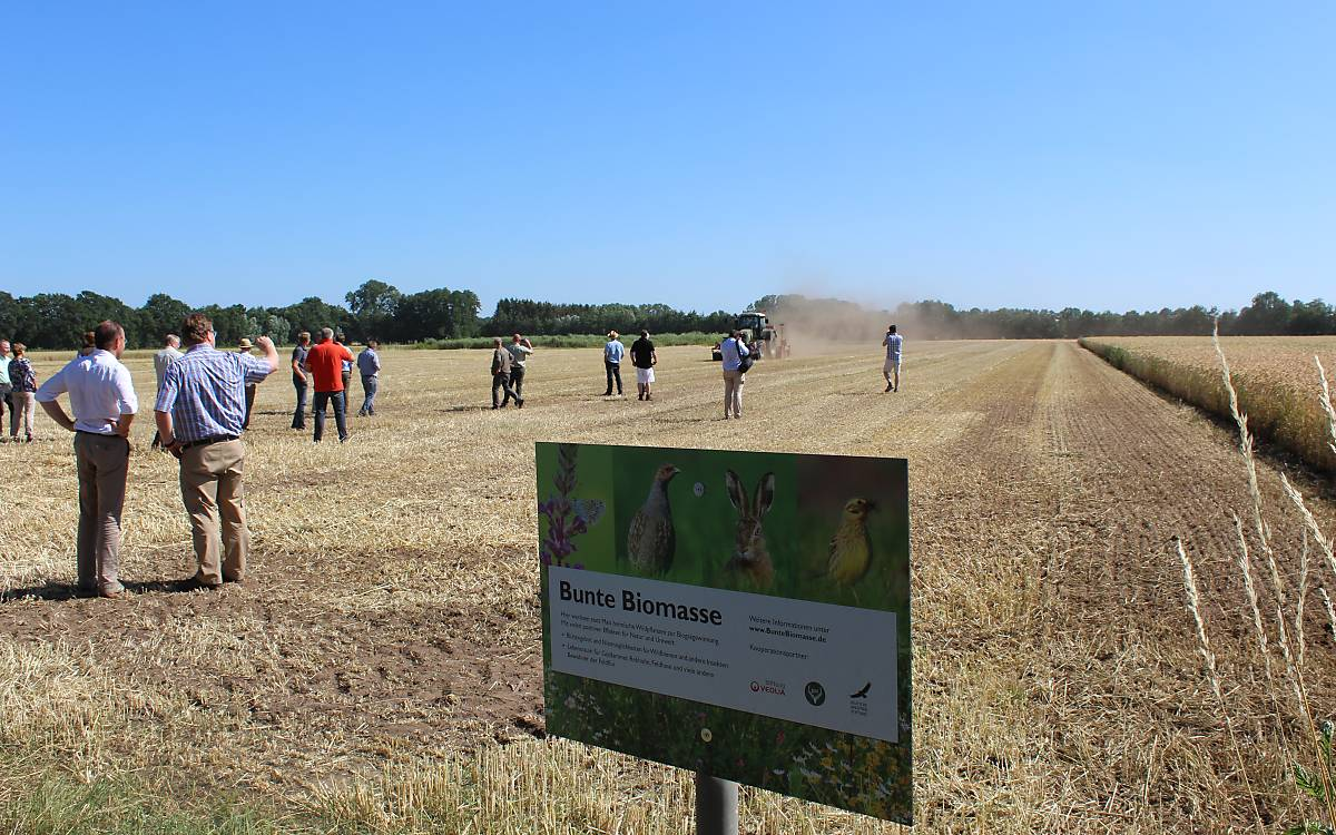 Blühende Wildpflanzen statt Maismonokultur - hier wird eine mehrjährige Wildpflanzenmischung eingesät (Foto. C. Kemnade)