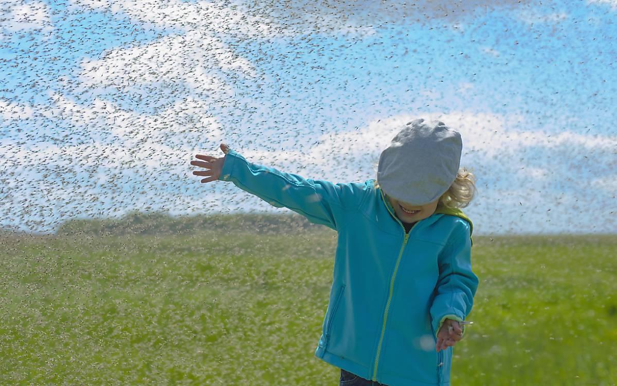Kind im Mückenschwarm in Mecklenburg-Vorpommern.