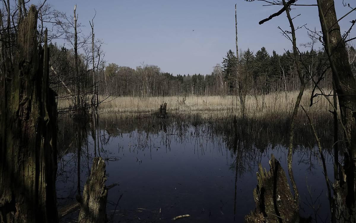 deutsche wildtier stiftung  ein neuer urwald entsteht in