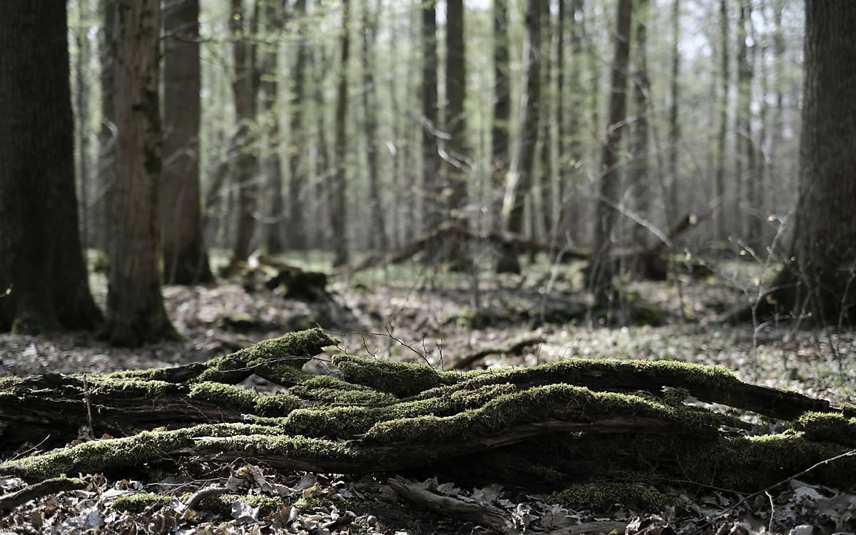 Totholz ist Lebensraum für viele seltene Arten