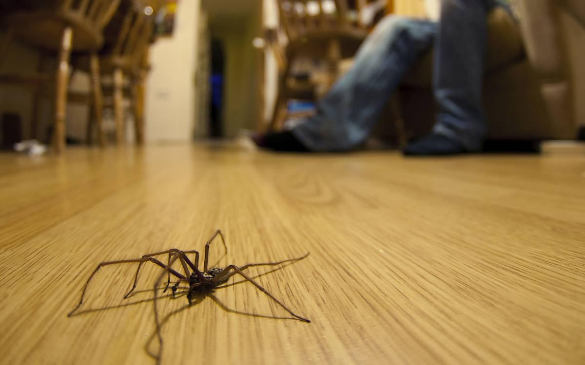 Spinnen kennenlernen