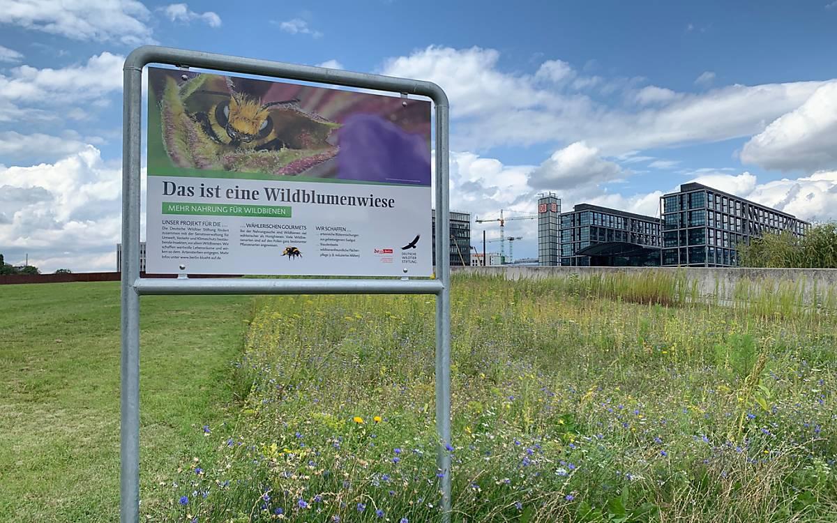 Wildblumenwiese im Regierungsviertel - Foto: DeWiSt / Stella Weweler