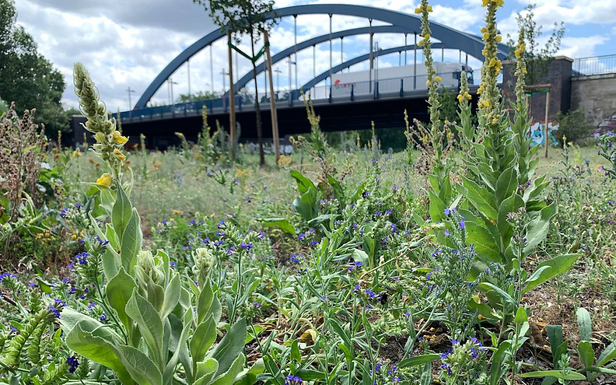 5_berliner-wildbienen-team-zieht-jahresbilanz