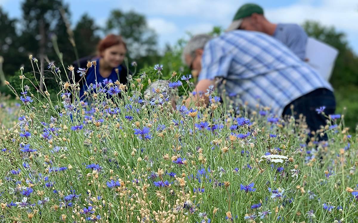 Wissenschaftliche Untersuchung einer Wildblumenwiese - Foto: DeWiSt / Stella Weweler