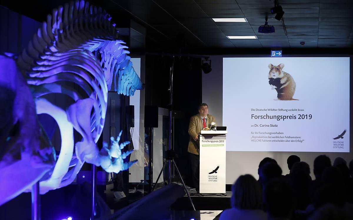 Prof. Dr. Dr. Sven Herzog, Vorsitzender der Forschungspreisjury. Foto: Andreas Costanzo