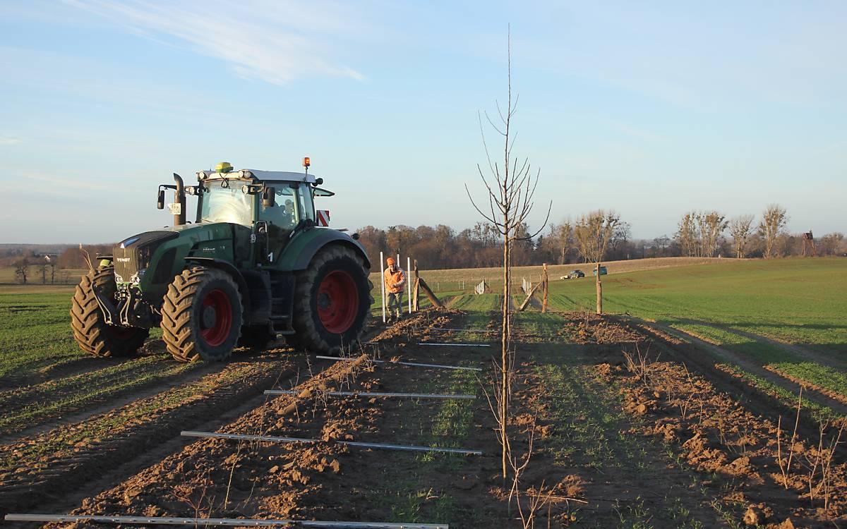 Mit dem Traktor werden die Pflanzungen vorbereitet - Foto: Michael Tetzlaff