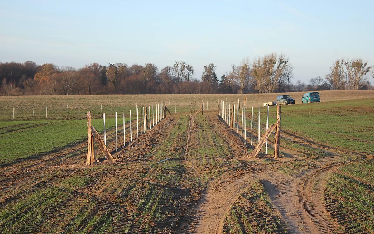Dreireihige Hecken werden gepflanzt - Foto: Michael Tetzlaff