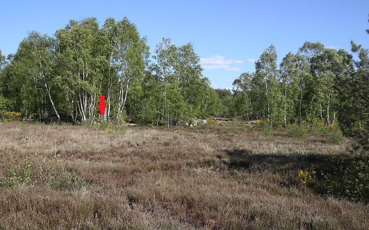 Lage des Wurfverstecks in der Heidelandschaft (Foto: Malte Götz)