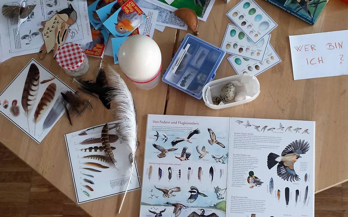 Ein Workshop zum Thema Vögel.