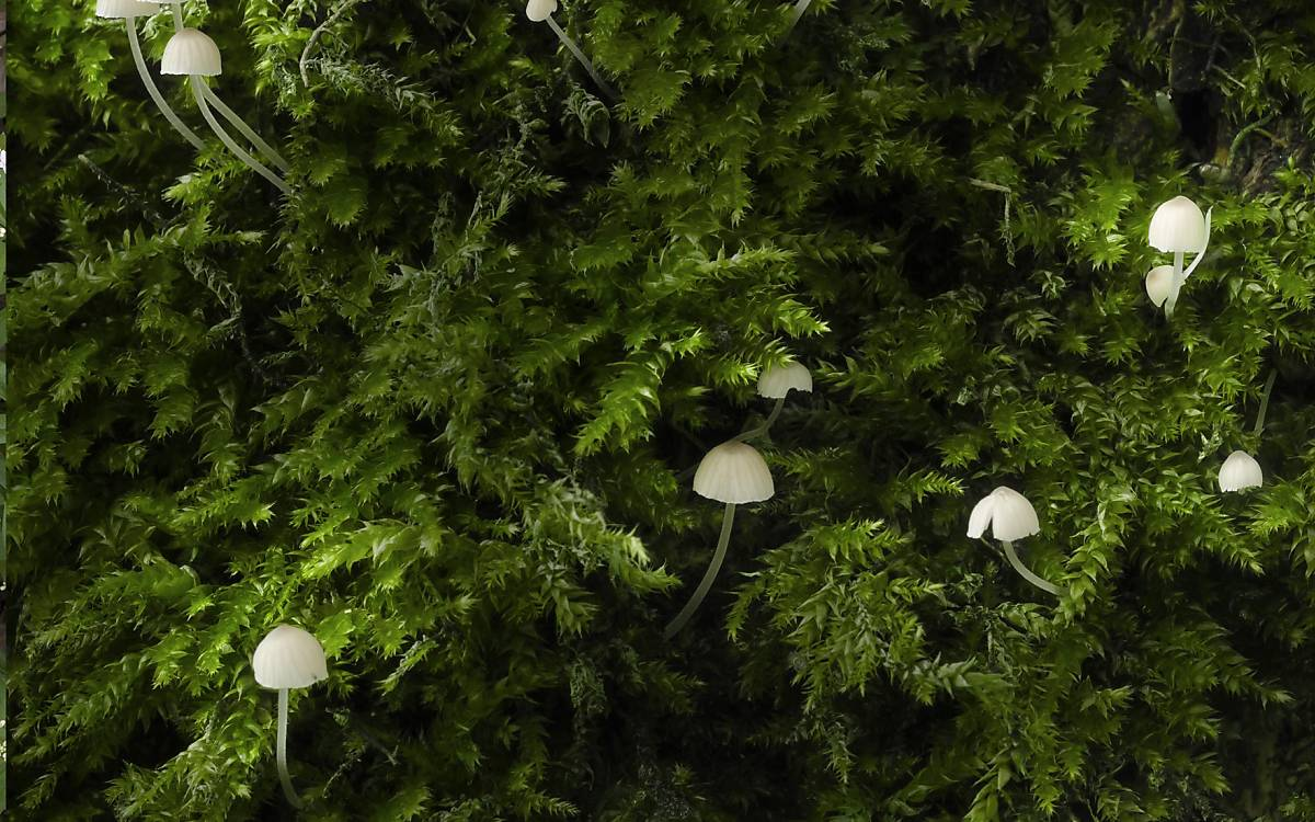 Ein wichtiges Bestimmungsmerkmal bei Moosen sind die sogenannten Etagen. Dies sind Jahrestriebe, die stockwerkartig übereinander stehen. Daher der Name Etagenmoos (Hylocomium splendens).