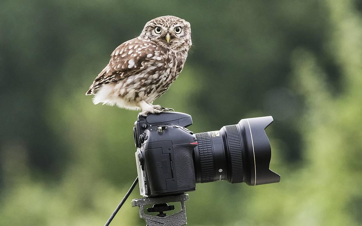 headermotive_kauz-auf-kamera_imagebroker_dieter-mahlke
