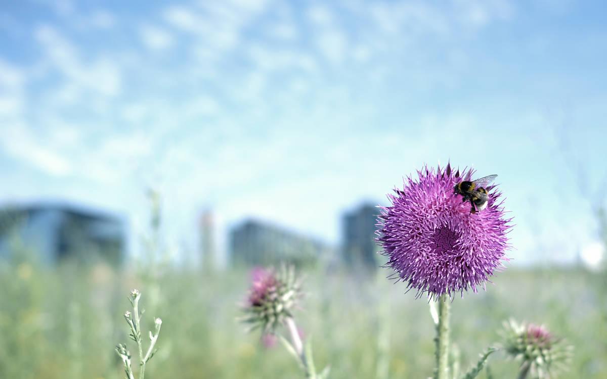 fullscreen-wildbienen-projekt-neu
