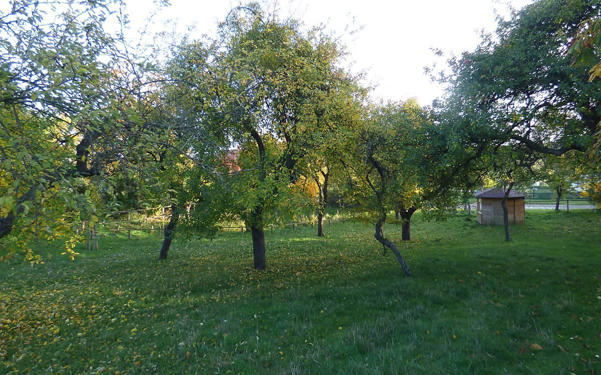 Auf einer Streuobstwiese dürfen Obstbäume wachsen, ohne profitabel sein zu müssen