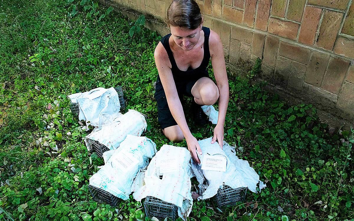 Früh am Morgen bereitet Dr. Carina Siutz die Fallen für das (völlig ungefährliche) Einfangen der Feldhamster vor
