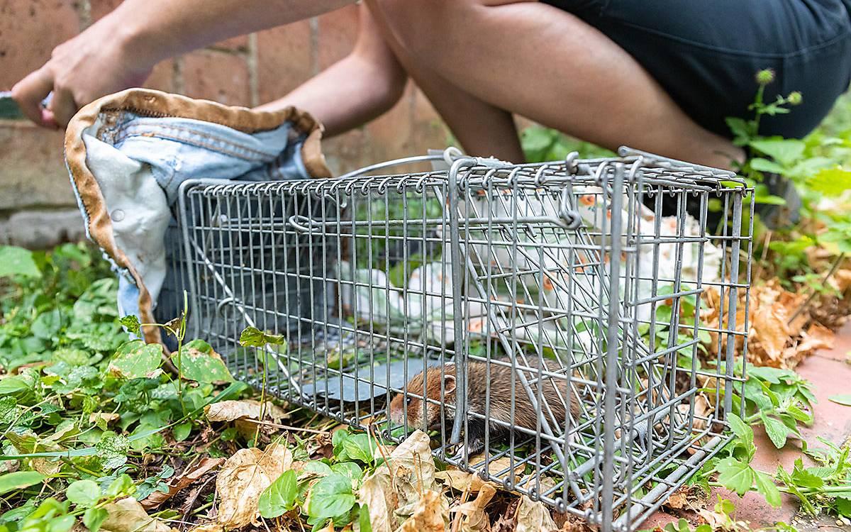 Vom Käfig aus schlüpft der Hamster nun in einen  so genannten Untersuchungsbeutel , den sie selbst genäht hat