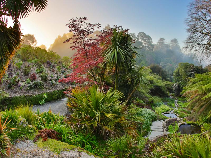 Trebah Garden photograph of their tropical gardens