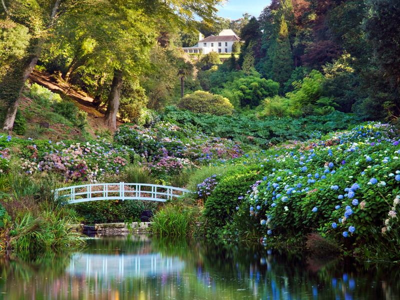 Photograph of the Mallard pond at Trebah Garden