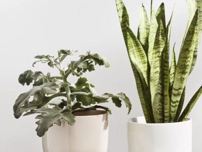 Cloudberry Living Iittala Nappula Plant Pot