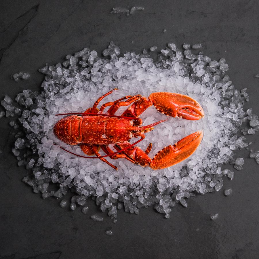 whole cornish fresh lobster