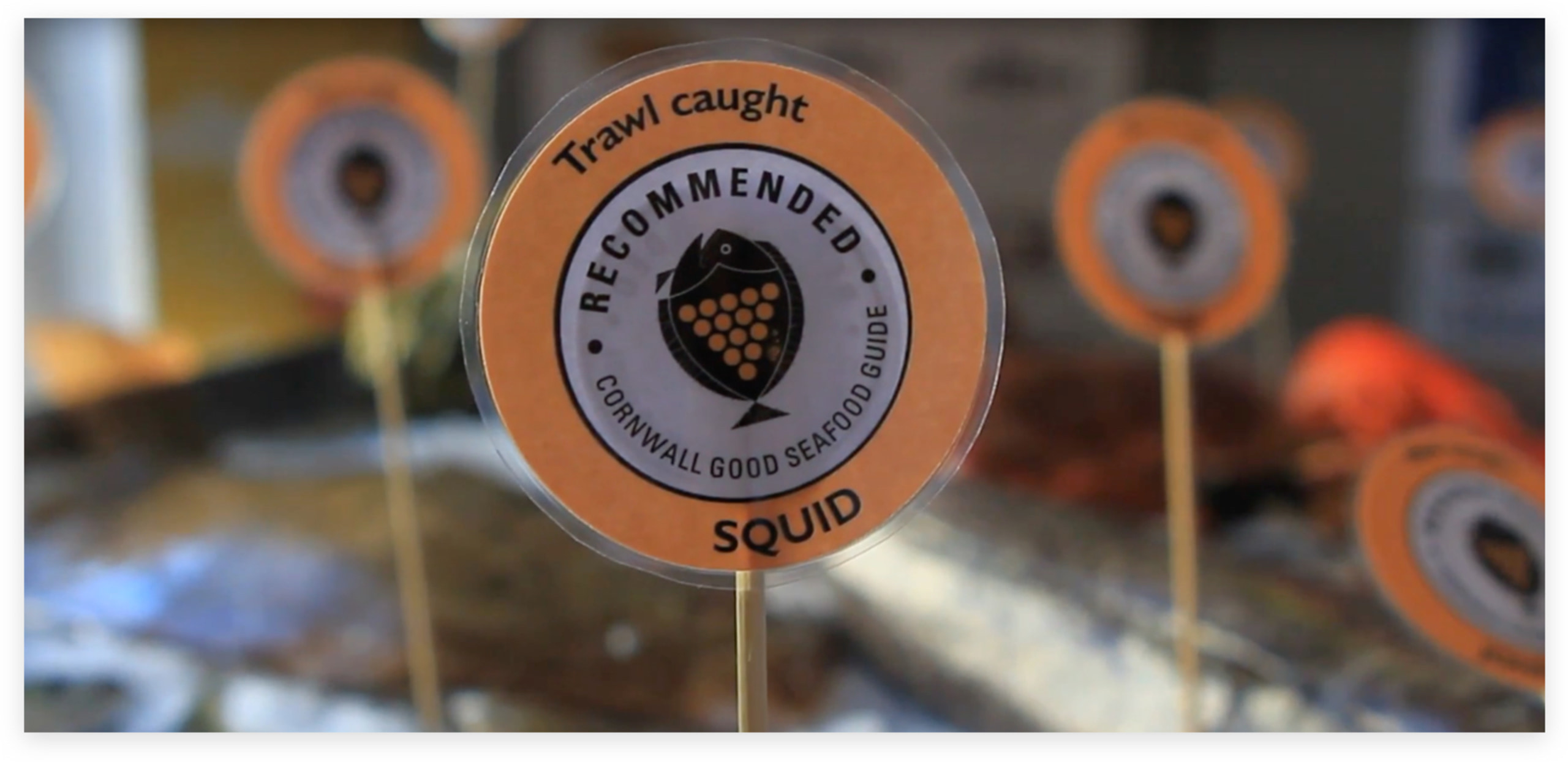 cornwall good seafood guide recommended trawl caught badge