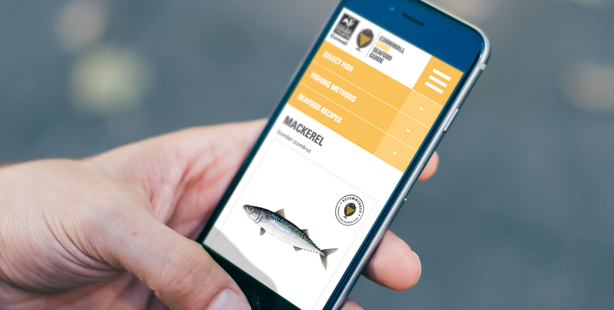 cornwall good seafood guide website on mobile device