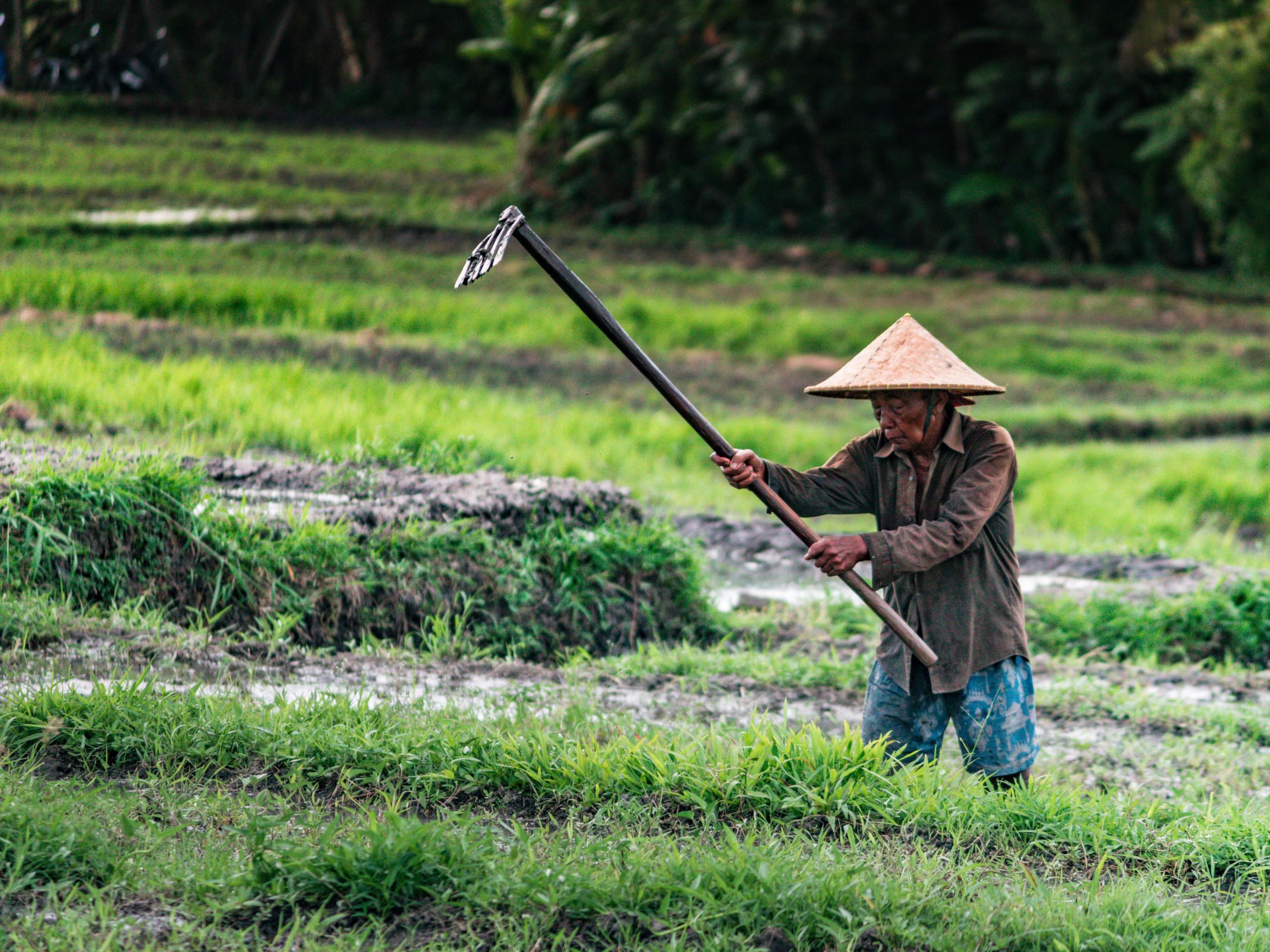 Gardening in field