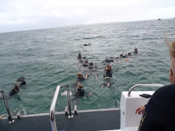 イルカと泳ぐよ②