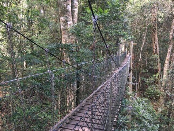 熱帯雨林を散策