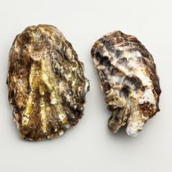 Visgilde Lijffijt & de Jong - Creuze oesters