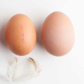 Landwinkel de Groenekan - Eieren scharrel groot