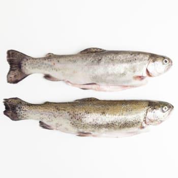 Vof. Vishandel R. van de Mheen - Forel