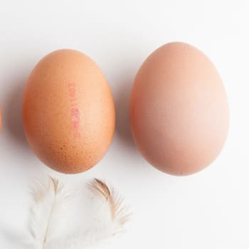 Landwinkel de Groenekan - Eieren scharrel middel