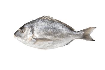 Vishandel Best Fish Almere - Dorade Royal heel