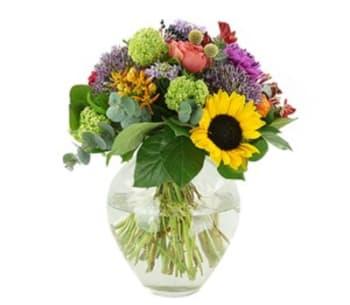 Bloemen aan de Vecht - Compact zomer