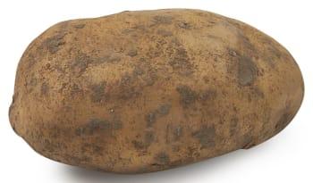 Deli Saison - Aardappel Nicola