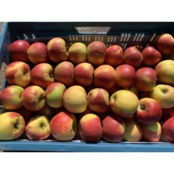 Fruitkwekerij De Stokhorst - Delcorf Appels