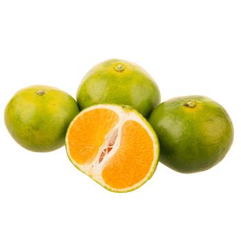 Landzicht Biologisch - Satsuma ''Iwasaki'' mandarijn