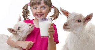 kozí mléko