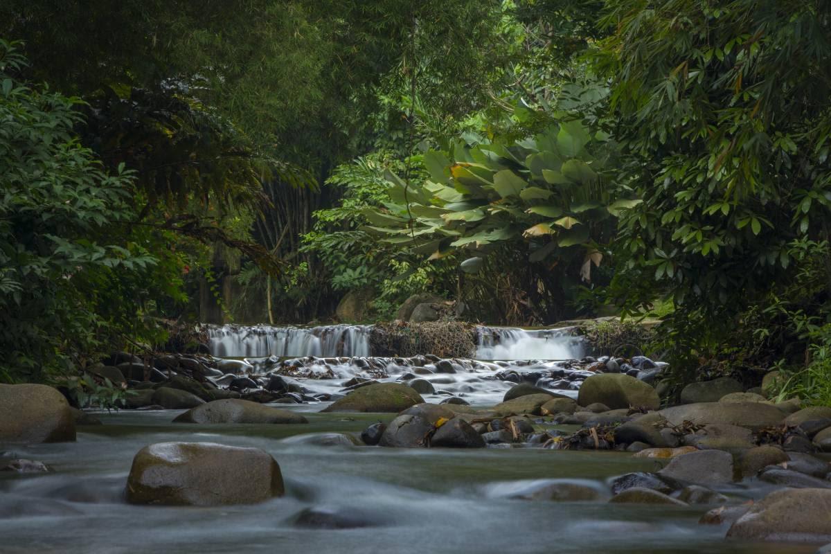 Hidden Gems in Malaysia; Peace and Quiet from Janda Baik, Pahang.