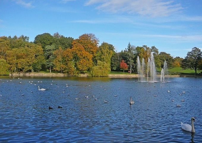 The lake in Roundhay Park, Leeds, full of water birds.