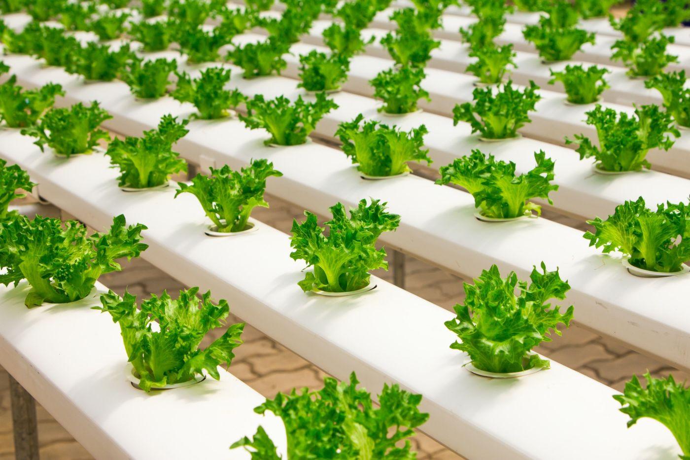 Vertical Farming, Zukunft, Nachhaltigkeit, organic farming, urban farming